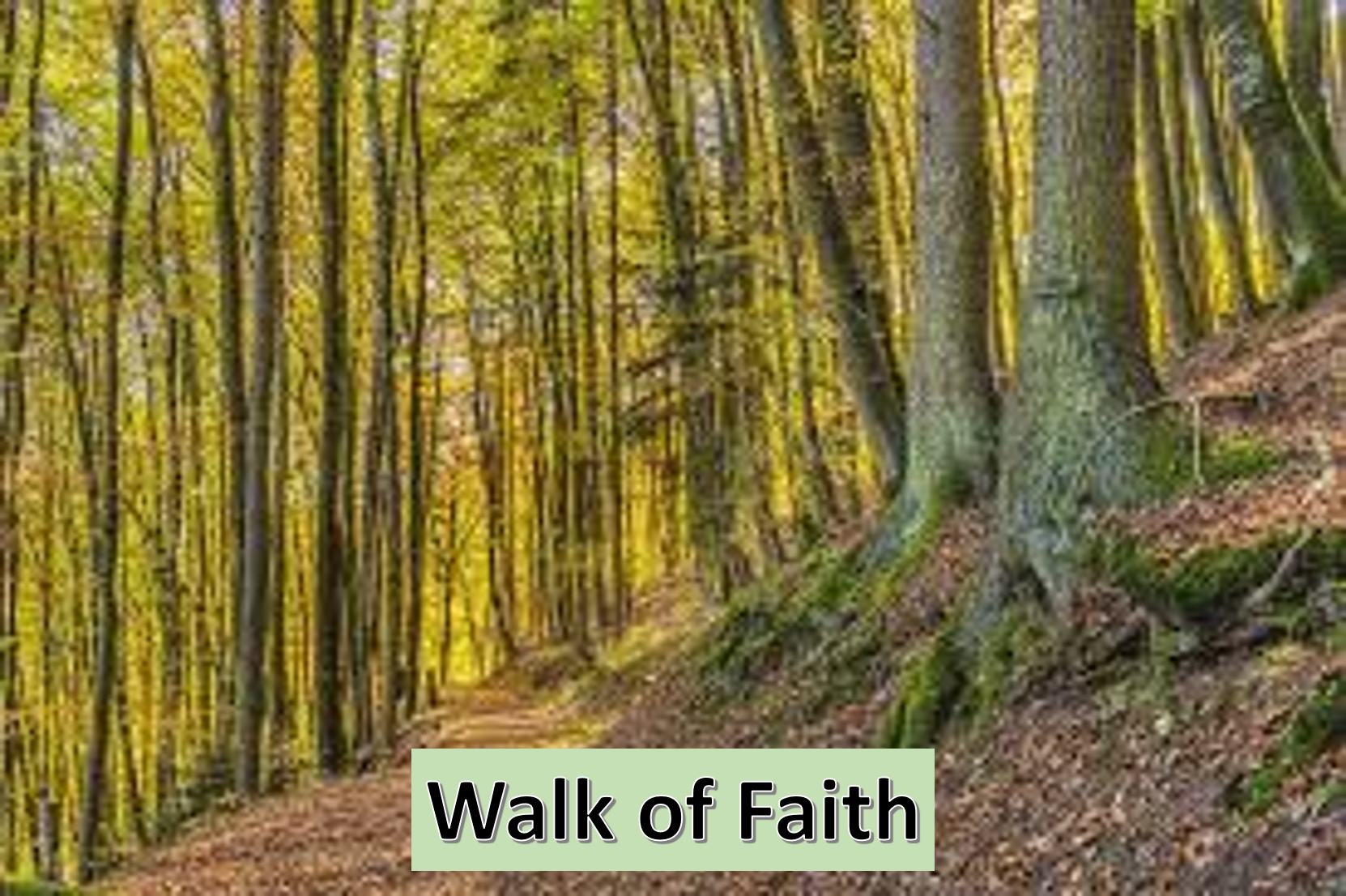 A study of our walk with Christ.